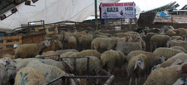 100 domba titipan rakyat Indonesia disembelih untuk mendapatkan ridha Allah di Jalur Gaza. Foto: Sahabat Al-Aqsha/Al-Sarraa Foundation